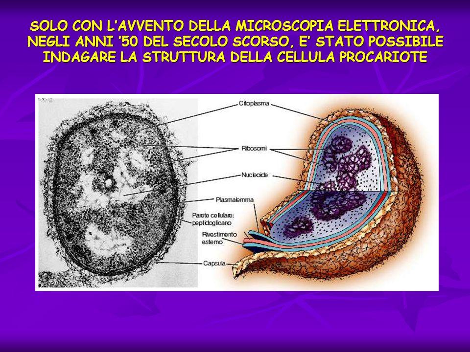 SOLO CON LAVVENTO DELLA MICROSCOPIA ELETTRONICA, NEGLI ANNI 50 DEL SECOLO SCORSO, E STATO POSSIBILE INDAGARE LA STRUTTURA DELLA CELLULA PROCARIOTE