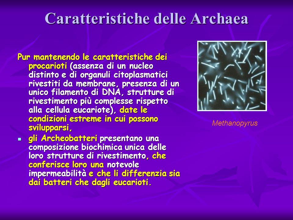 Caratteristiche delle Archaea Pur mantenendo le caratteristiche dei procarioti (assenza di un nucleo distinto e di organuli citoplasmatici rivestiti d