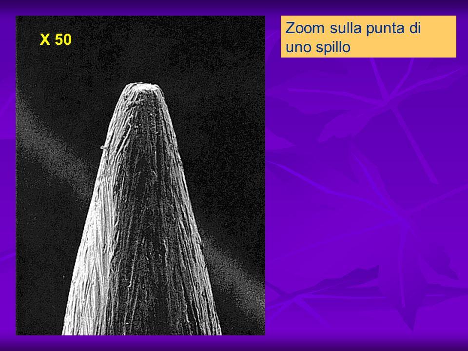 Zoom sulla punta di uno spillo X 50