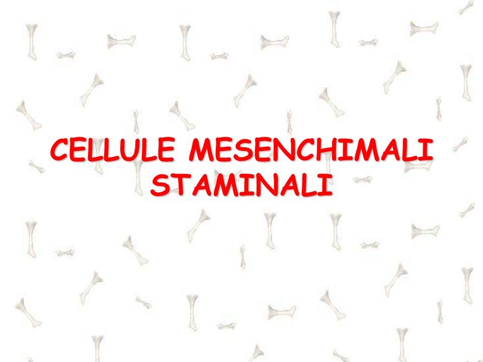 CELLULE MESENCHIMALI STAMINALI