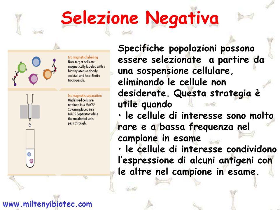 Selezione Negativa Specifiche popolazioni possono essere selezionate a partire da una sospensione cellulare, eliminando le cellule non desiderate. Que