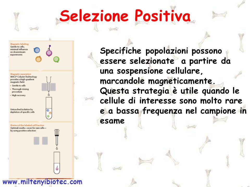 Selezione Positiva www.miltenyibiotec.com Specifiche popolazioni possono essere selezionate a partire da una sospensione cellulare, marcandole magneti
