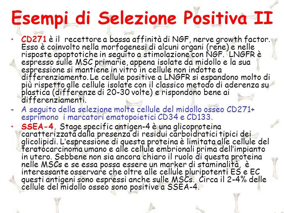Esempi di Selezione Positiva II CD271 è il recettore a bassa affinità di NGF, nerve growth factor. Esso è coinvolto nella morfogenesi di alcuni organi