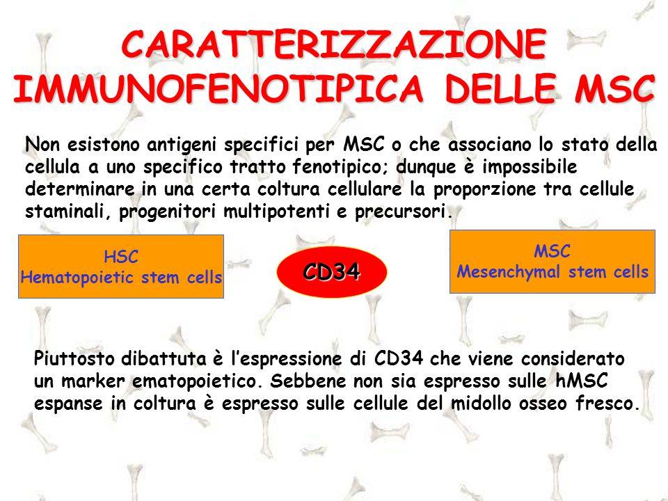 CARATTERIZZAZIONE IMMUNOFENOTIPICA DELLE MSC Non esistono antigeni specifici per MSC o che associano lo stato della cellula a uno specifico tratto fen