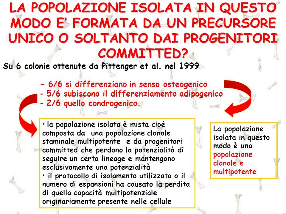 LA POPOLAZIONE ISOLATA IN QUESTO MODO E FORMATA DA UN PRECURSORE UNICO O SOLTANTO DAI PROGENITORI COMMITTED? - 6/6 si differenziano in senso osteogeni
