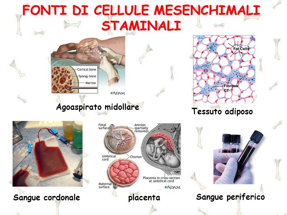FONTI DI CELLULE MESENCHIMALI STAMINALI Agoaspirato midollare Sangue cordonaleplacenta Sangue periferico Tessuto adiposo