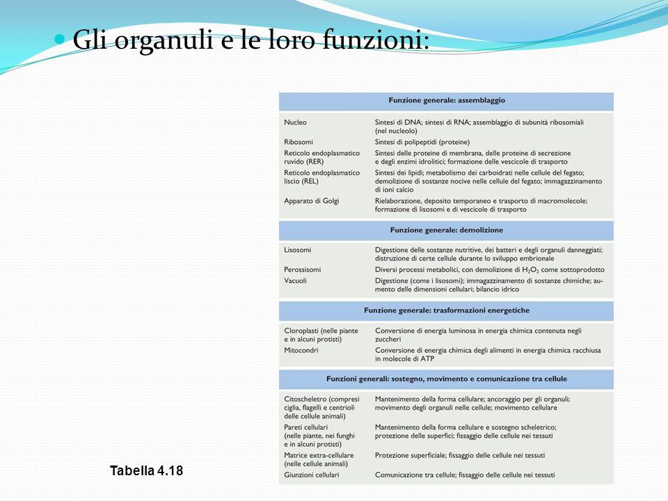Gli organuli e le loro funzioni: Tabella 4.18