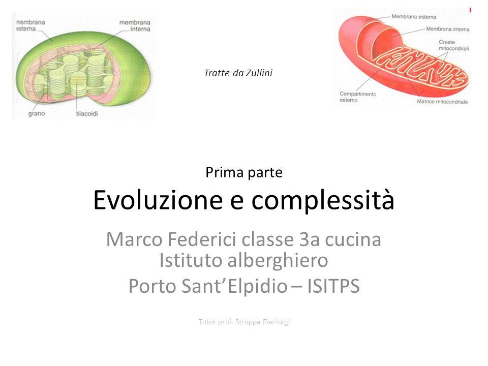 Prima parte Evoluzione e complessità Marco Federici classe 3a cucina Istituto alberghiero Porto SantElpidio – ISITPS Tutor prof. Stroppa Pierluigi Tra