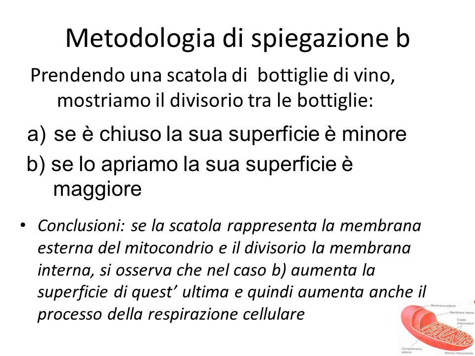 Metodologia di spiegazione b Prendendo una scatola di bottiglie di vino, mostriamo il divisorio tra le bottiglie: Conclusioni: se la scatola rappresen
