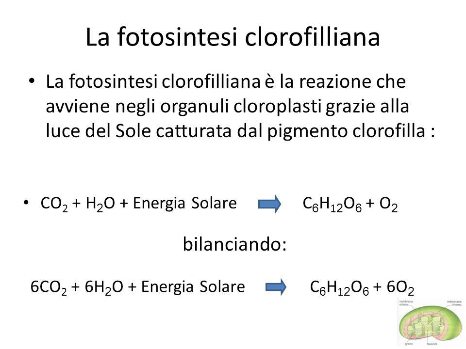 La fotosintesi clorofilliana La fotosintesi clorofilliana è la reazione che avviene negli organuli cloroplasti grazie alla luce del Sole catturata dal