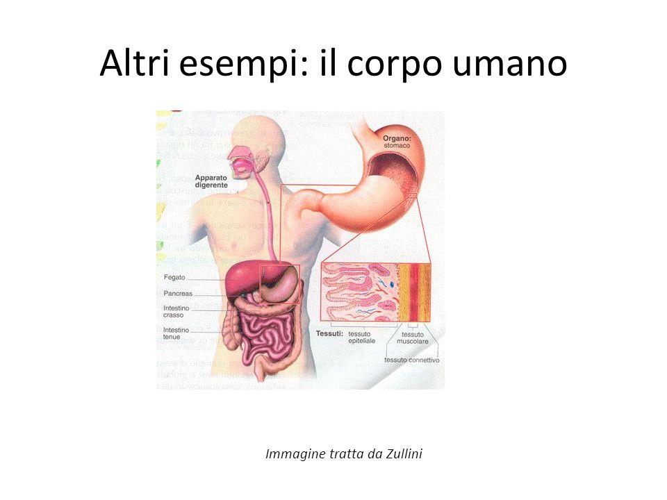 Altri esempi: il corpo umano Immagine tratta da Zullini