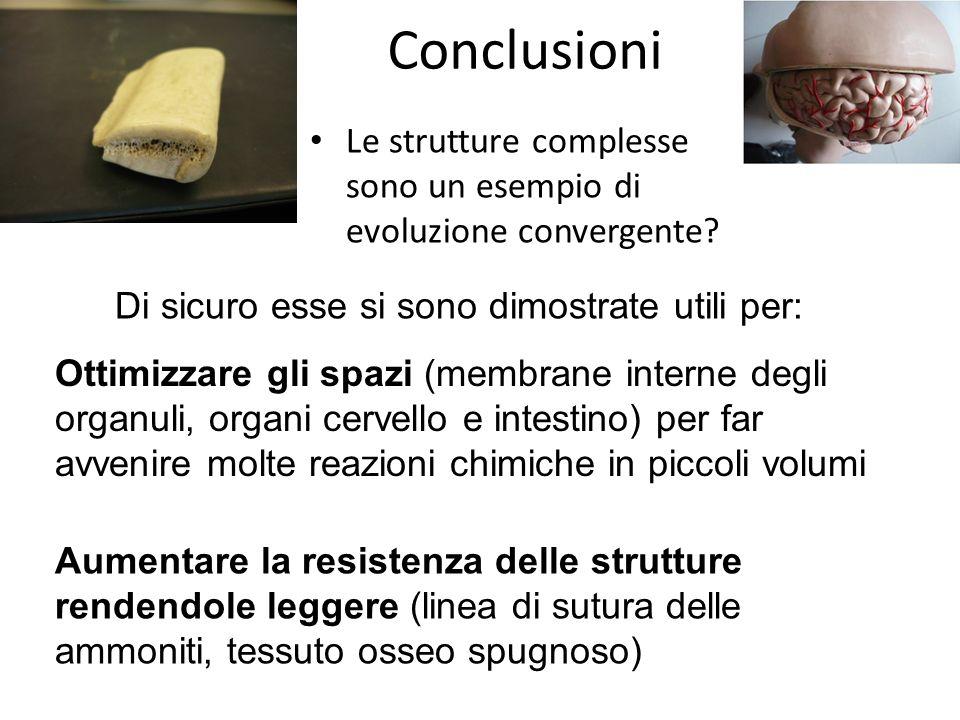 Conclusioni Le strutture complesse sono un esempio di evoluzione convergente? Di sicuro esse si sono dimostrate utili per: Ottimizzare gli spazi (memb