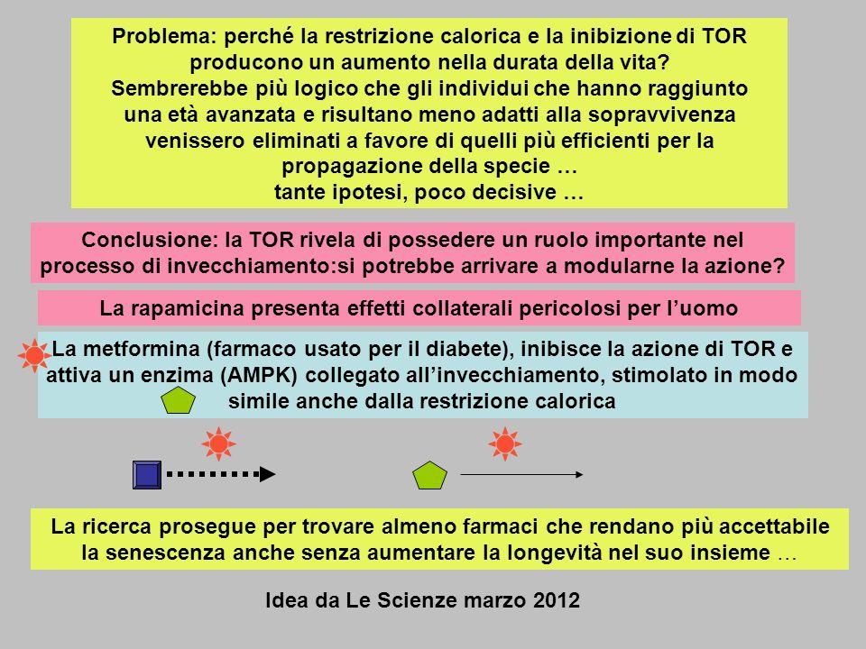 Problema: perché la restrizione calorica e la inibizione di TOR producono un aumento nella durata della vita? Sembrerebbe più logico che gli individui