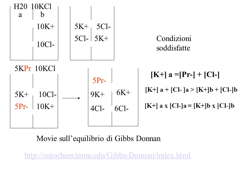 La comprensione di quanto avviene nella membrana cellulare parte dalla descrizione del più comune degli equilibri ionici passivi: lequilibrio di Gibbs