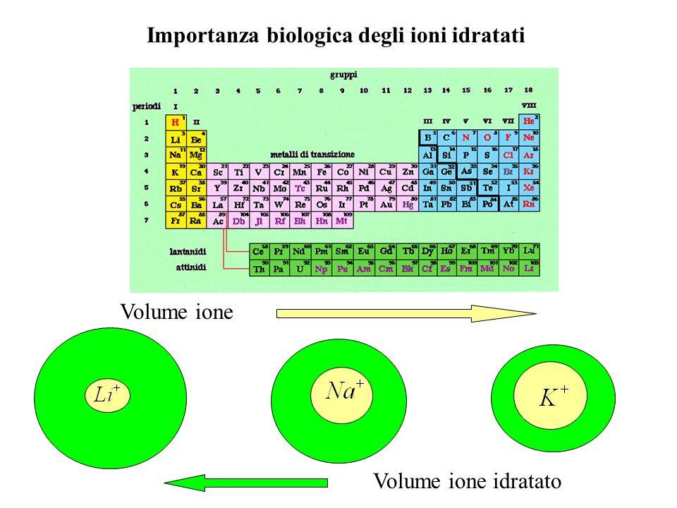 Il fatto che [Na + ] 1 + [Cl - ] 1 > [Na + ] 2 + [Cl - ] 2 ha importanti conseguenze a livello fisiologico: Gli anioni proteici spostano gli anioni di