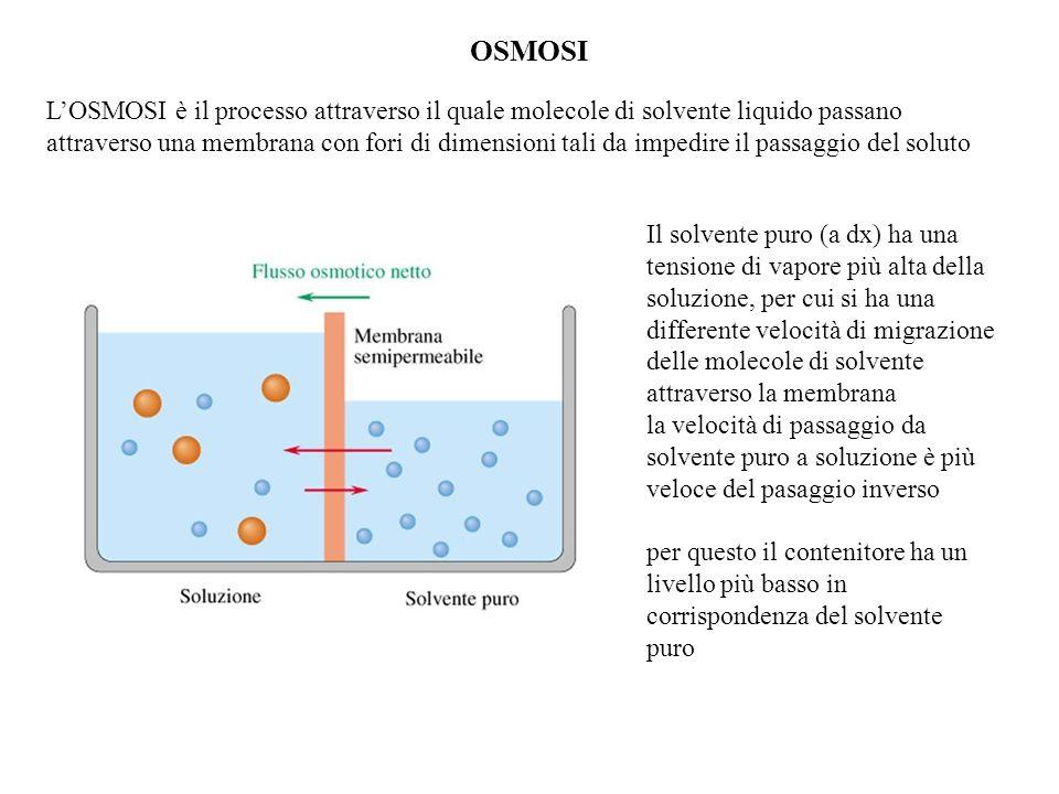 OSMOSI LOSMOSI è il processo attraverso il quale molecole di solvente liquido passano attraverso una membrana con fori di dimensioni tali da impedire il passaggio del soluto Il solvente puro (a dx) ha una tensione di vapore più alta della soluzione, per cui si ha una differente velocità di migrazione delle molecole di solvente attraverso la membrana la velocità di passaggio da solvente puro a soluzione è più veloce del pasaggio inverso per questo il contenitore ha un livello più basso in corrispondenza del solvente puro