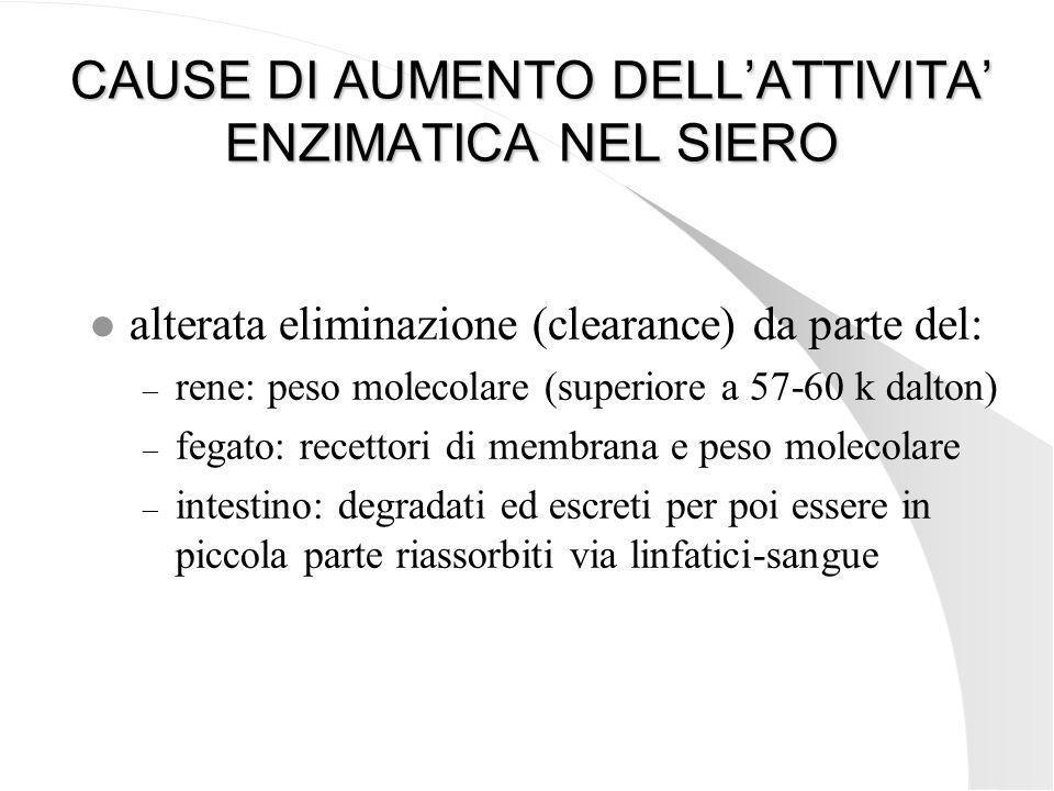 CAUSE DI AUMENTO DELLATTIVITA ENZIMATICA NEL SIERO l alterata eliminazione (clearance) da parte del: – rene: peso molecolare (superiore a 57-60 k dalt