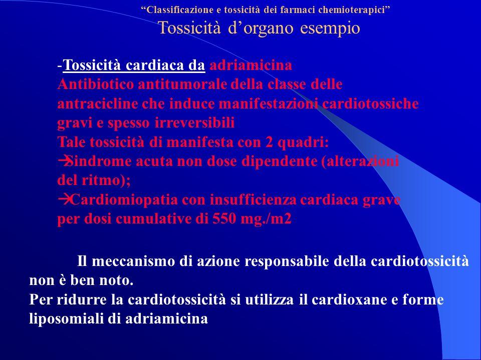 Classificazione e tossicità dei farmaci chemioterapici Tossicità dorgano esempio -Tossicità cardiaca da adriamicina Antibiotico antitumorale della classe delle antracicline che induce manifestazioni cardiotossiche gravi e spesso irreversibili Tale tossicità di manifesta con 2 quadri: Sindrome acuta non dose dipendente (alterazioni del ritmo); Cardiomiopatia con insufficienza cardiaca grave per dosi cumulative di 550 mg./m2 Il meccanismo di azione responsabile della cardiotossicità non è ben noto.
