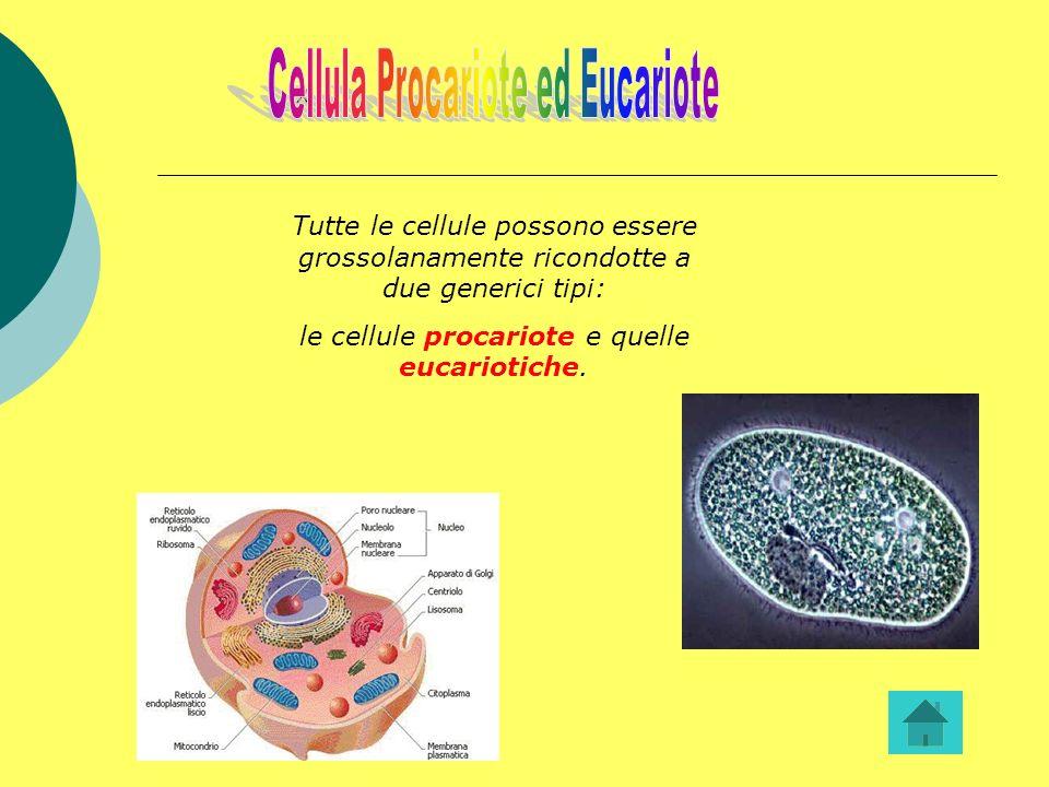 Tutte le cellule possono essere grossolanamente ricondotte a due generici tipi: le cellule procariote e quelle eucariotiche. x