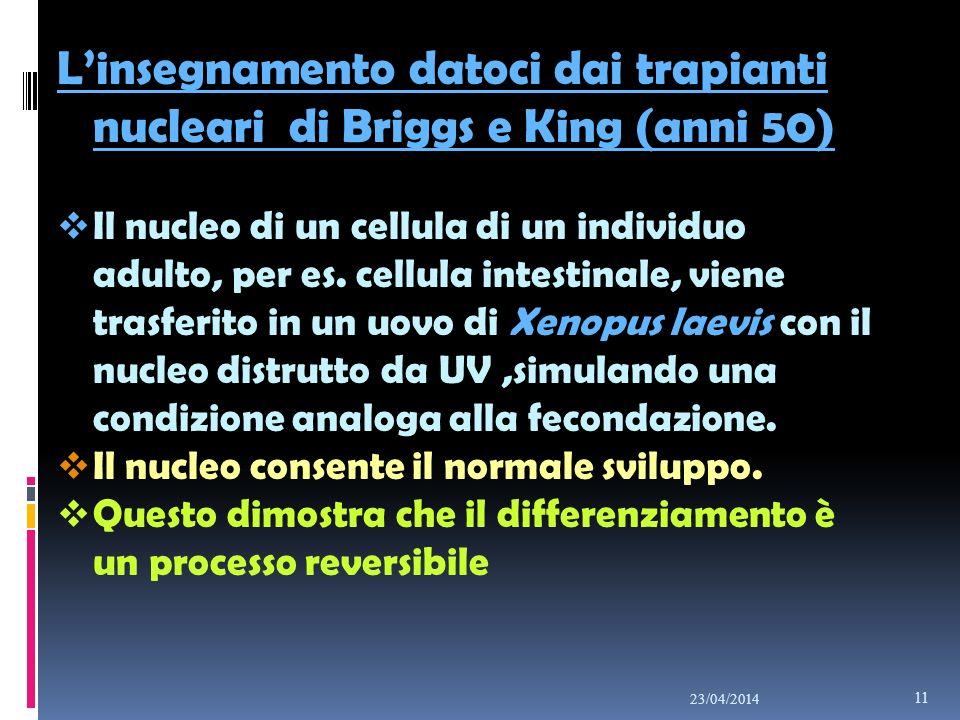 Linsegnamento datoci dai trapianti nucleari di Briggs e King (anni 50) Il nucleo di un cellula di un individuo adulto, per es. cellula intestinale, vi