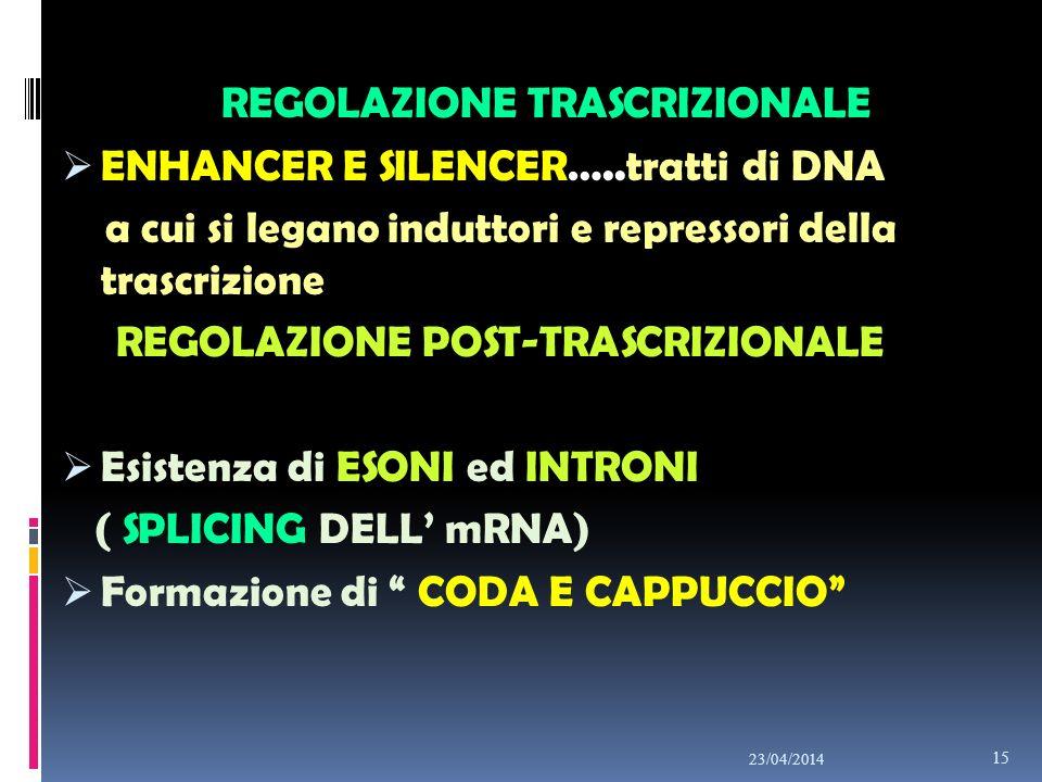 REGOLAZIONE TRASCRIZIONALE ENHANCER E SILENCER…..tratti di DNA a cui si legano induttori e repressori della trascrizione REGOLAZIONE POST-TRASCRIZIONA