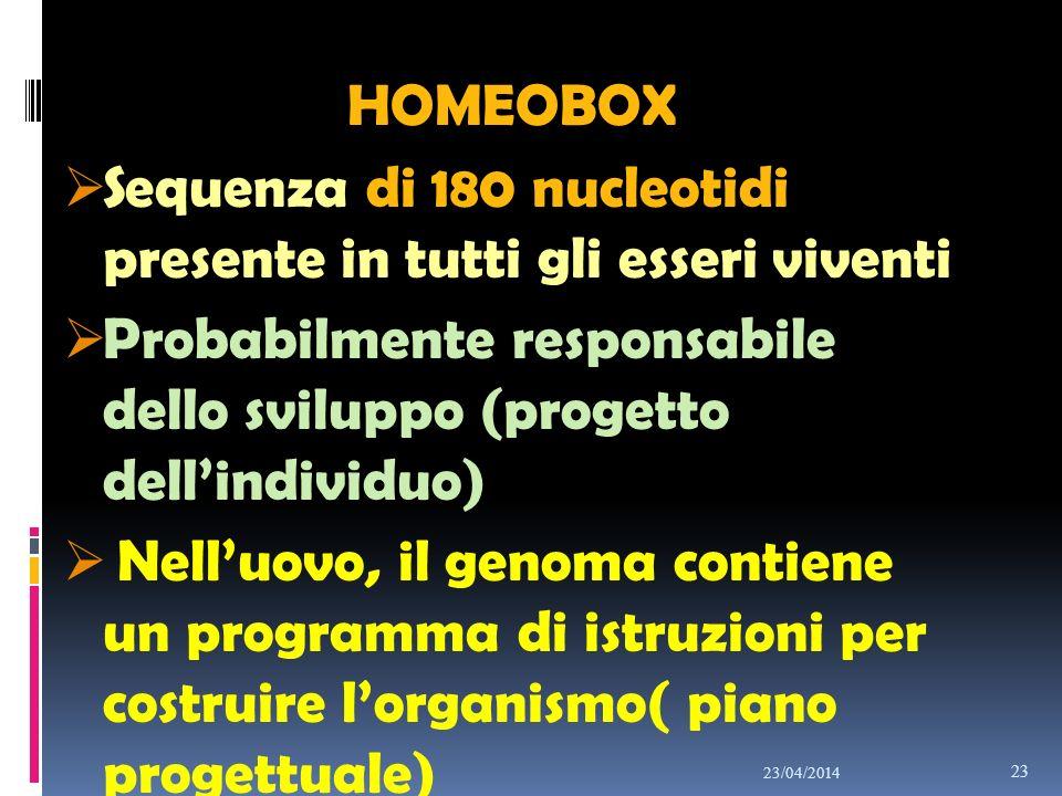 HOMEOBOX Sequenza di 180 nucleotidi presente in tutti gli esseri viventi Probabilmente responsabile dello sviluppo (progetto dellindividuo) Nelluovo,