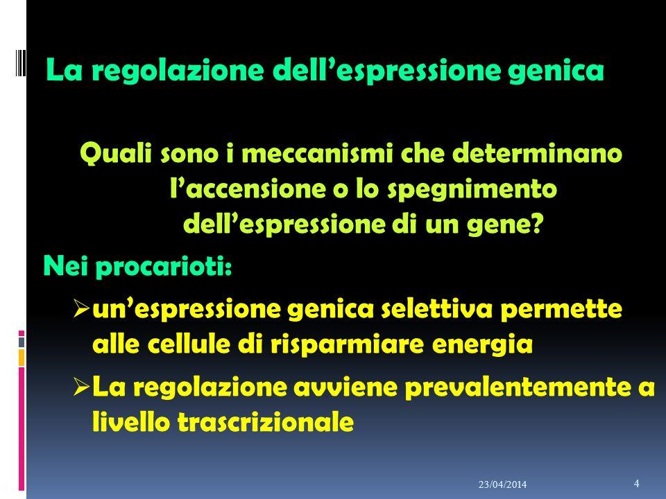 REGOLAZIONE TRASCRIZIONALE ENHANCER E SILENCER…..tratti di DNA a cui si legano induttori e repressori della trascrizione REGOLAZIONE POST-TRASCRIZIONALE Esistenza di ESONI ed INTRONI ( SPLICING DELL mRNA) Formazione di CODA E CAPPUCCIO 23/04/2014 15