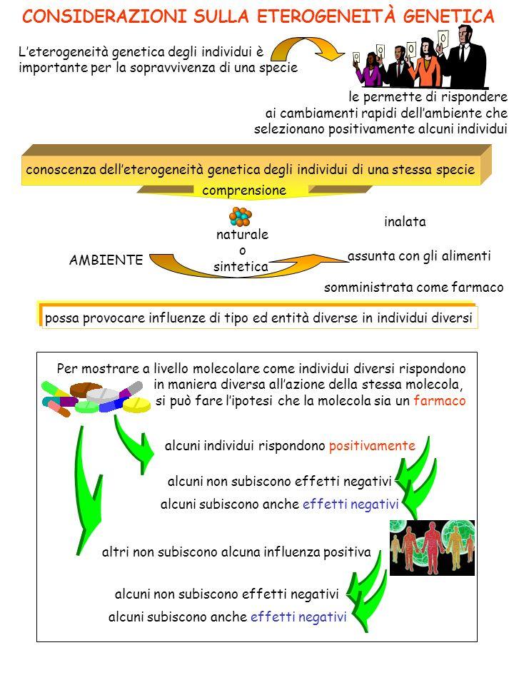 CONSIDERAZIONI SULLA ETEROGENEITÀ GENETICA le permette di rispondere ai cambiamenti rapidi dellambiente che selezionano positivamente alcuni individui Leterogeneità genetica degli individui è importante per la sopravvivenza di una specie conoscenza delleterogeneità genetica degli individui di una stessa specie comprensione naturale o sintetica AMBIENTE inalata assunta con gli alimenti somministrata come farmaco possa provocare influenze di tipo ed entità diverse in individui diversi Per mostrare a livello molecolare come individui diversi rispondono in maniera diversa allazione della stessa molecola, si può fare lipotesi che la molecola sia un farmaco alcuni individui rispondono positivamente altri non subiscono alcuna influenza positiva alcuni non subiscono effetti negativi alcuni subiscono anche effetti negativi alcuni non subiscono effetti negativi alcuni subiscono anche effetti negativi
