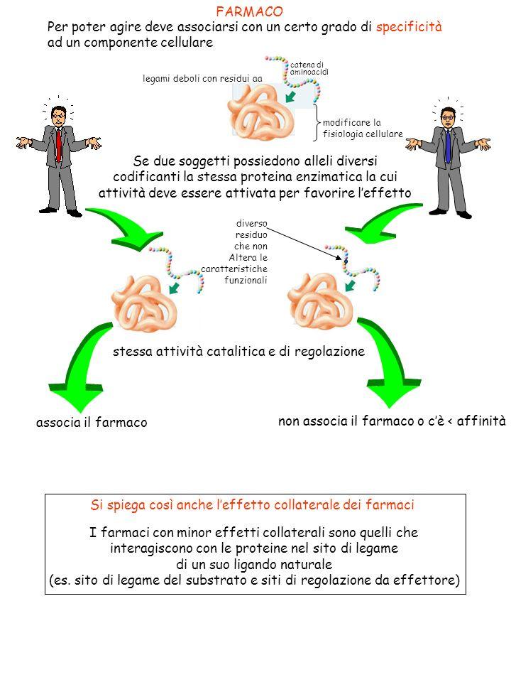Se due soggetti possiedono alleli diversi codificanti la stessa proteina enzimatica la cui attività deve essere attivata per favorire leffetto FARMACO Per poter agire deve associarsi con un certo grado di specificità ad un componente cellulare + - catena di aminoacidi modificare la fisiologia cellulare legami deboli con residui aa stessa attività catalitica e di regolazione diverso residuo che non Altera le caratteristiche funzionali associa il farmaco non associa il farmaco o cè < affinità Si spiega così anche leffetto collaterale dei farmaci I farmaci con minor effetti collaterali sono quelli che interagiscono con le proteine nel sito di legame di un suo ligando naturale (es.