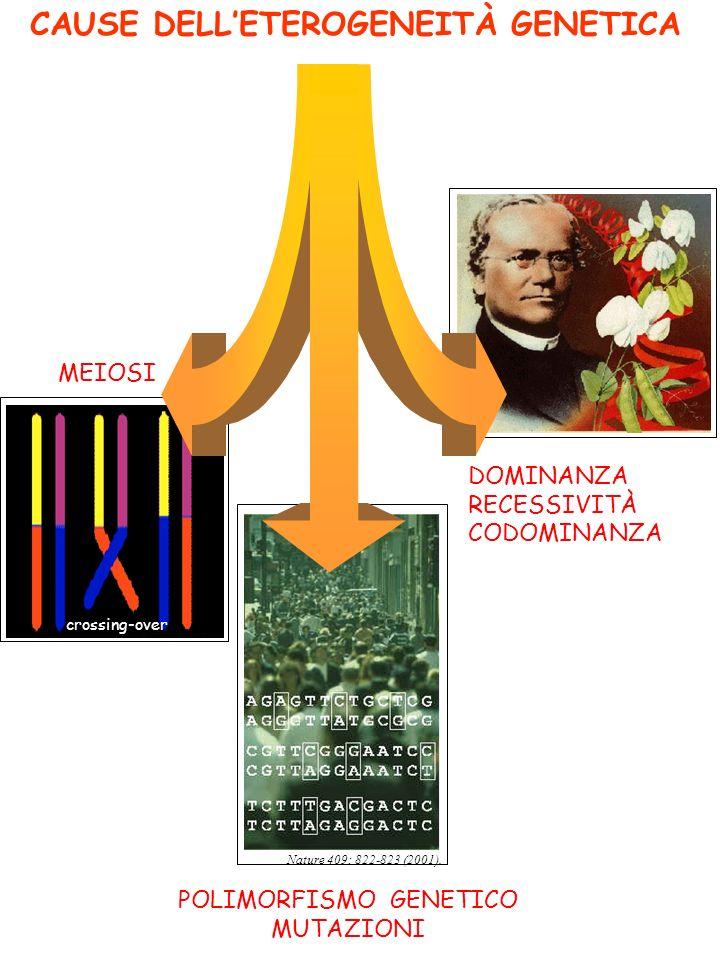 CAUSE DELLETEROGENEITÀ GENETICA MEIOSI POLIMORFISMO GENETICO MUTAZIONI DOMINANZA RECESSIVITÀ CODOMINANZA Nature 409: 822-823 (2001). crossing-over