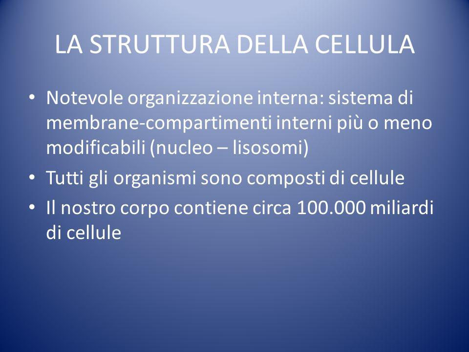 LA STRUTTURA DELLA CELLULA Notevole organizzazione interna: sistema di membrane-compartimenti interni più o meno modificabili (nucleo – lisosomi) Tutti gli organismi sono composti di cellule Il nostro corpo contiene circa 100.000 miliardi di cellule
