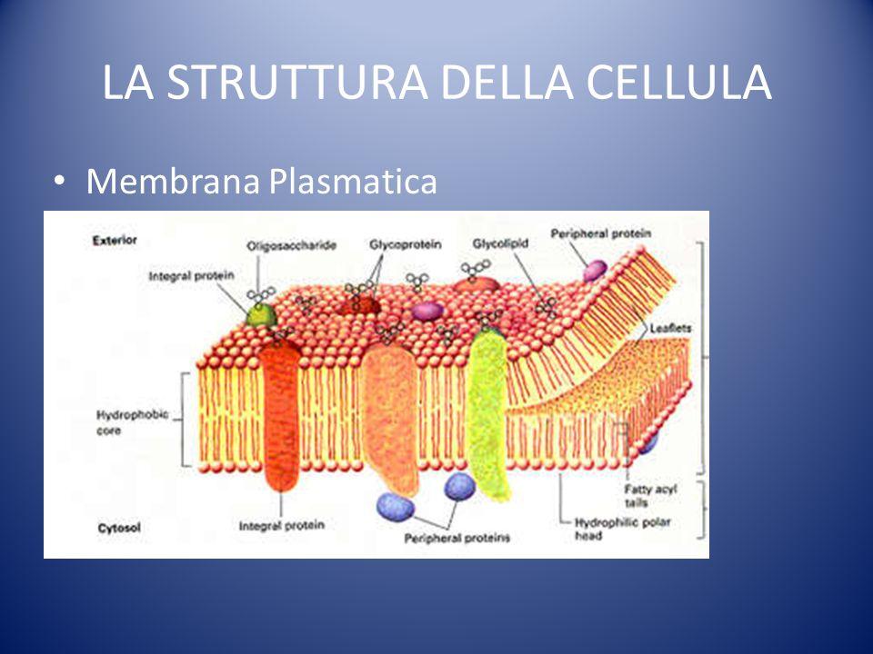 LA STRUTTURA DELLA CELLULA Membrana Plasmatica