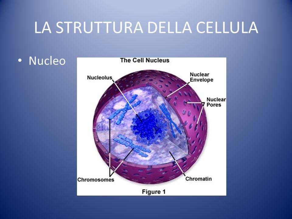 LA STRUTTURA DELLA CELLULA Nucleo