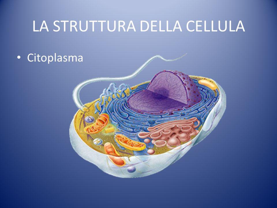 LA STRUTTURA DELLA CELLULA Citoplasma