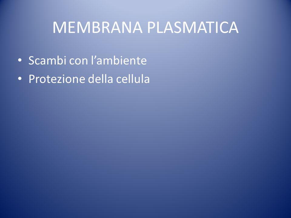 MEMBRANA PLASMATICA Scambi con lambiente Protezione della cellula