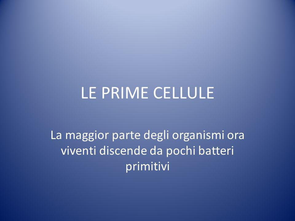 LE PRIME CELLULE La maggior parte degli organismi ora viventi discende da pochi batteri primitivi