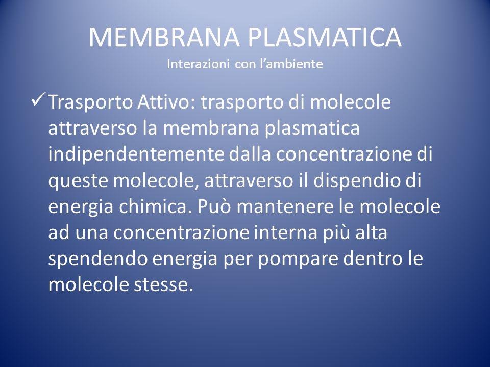 MEMBRANA PLASMATICA Interazioni con lambiente Trasporto Attivo: trasporto di molecole attraverso la membrana plasmatica indipendentemente dalla concentrazione di queste molecole, attraverso il dispendio di energia chimica.