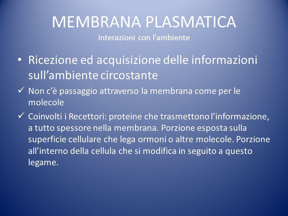 MEMBRANA PLASMATICA Interazioni con lambiente Ricezione ed acquisizione delle informazioni sullambiente circostante Non cè passaggio attraverso la membrana come per le molecole Coinvolti i Recettori: proteine che trasmettono linformazione, a tutto spessore nella membrana.