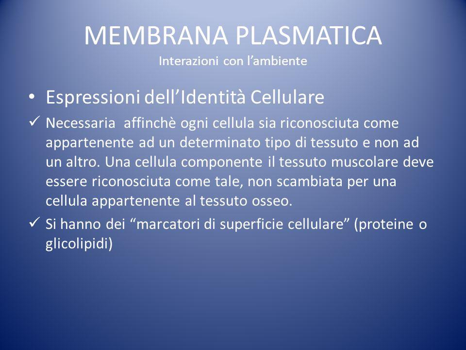MEMBRANA PLASMATICA Interazioni con lambiente Espressioni dellIdentità Cellulare Necessaria affinchè ogni cellula sia riconosciuta come appartenente ad un determinato tipo di tessuto e non ad un altro.