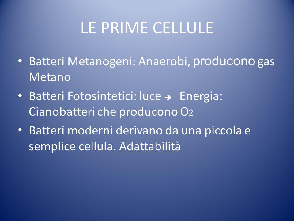 LE PRIME CELLULE Batteri Metanogeni: Anaerobi, producono gas Metano Batteri Fotosintetici: luce Energia: Cianobatteri che producono O 2 Batteri moderni derivano da una piccola e semplice cellula.