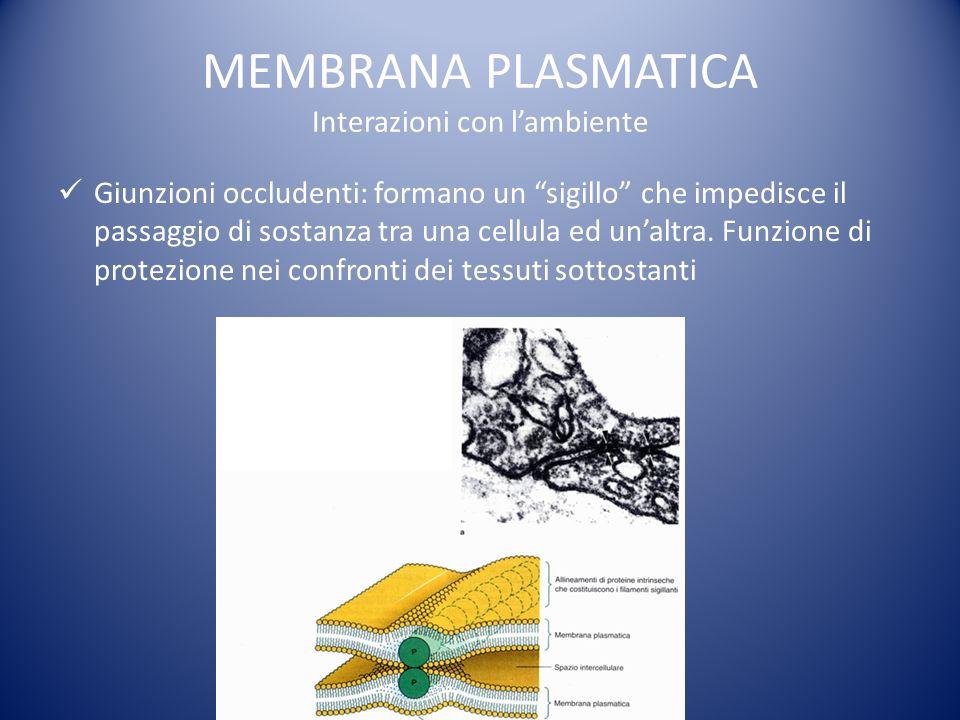 MEMBRANA PLASMATICA Interazioni con lambiente Giunzioni occludenti: formano un sigillo che impedisce il passaggio di sostanza tra una cellula ed unaltra.