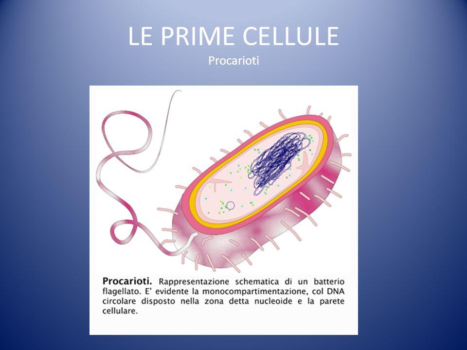 LE PRIME CELLULE Procarioti