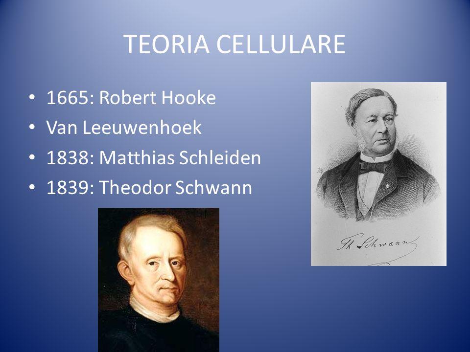TEORIA CELLULARE 1665: Robert Hooke Van Leeuwenhoek 1838: Matthias Schleiden 1839: Theodor Schwann
