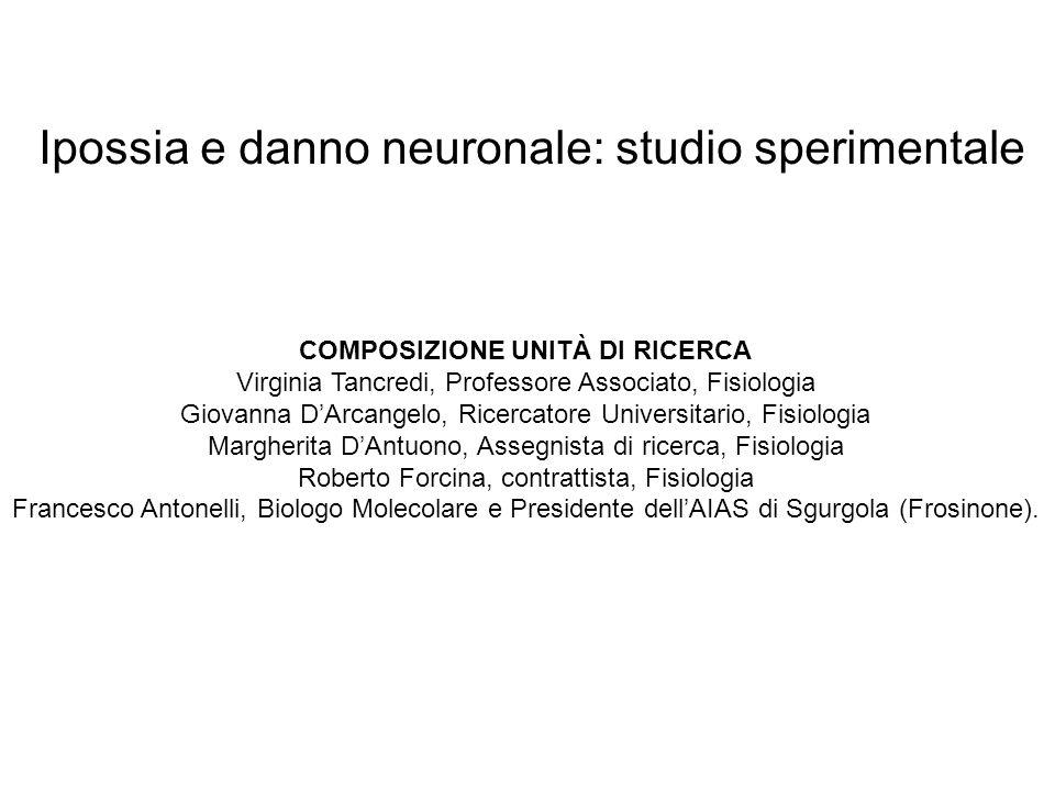 Ipossia e danno neuronale: studio sperimentale COMPOSIZIONE UNITÀ DI RICERCA Virginia Tancredi, Professore Associato, Fisiologia Giovanna DArcangelo,