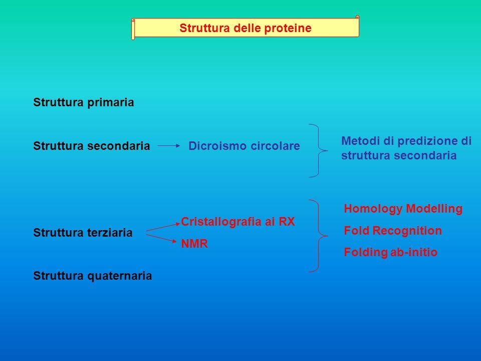 Struttura delle proteine Struttura primaria Struttura secondaria Struttura terziaria Struttura quaternaria Dicroismo circolare Cristallografia ai RX N