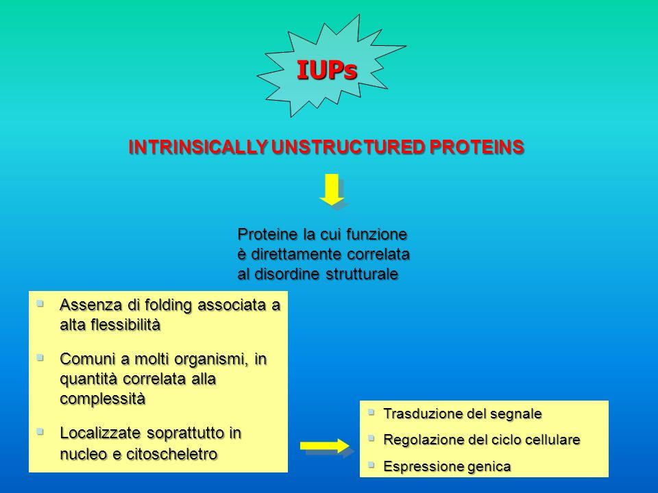 IUPs INTRINSICALLY UNSTRUCTURED PROTEINS Proteine la cui funzione è direttamente correlata al disordine strutturale Trasduzione del segnale Trasduzion