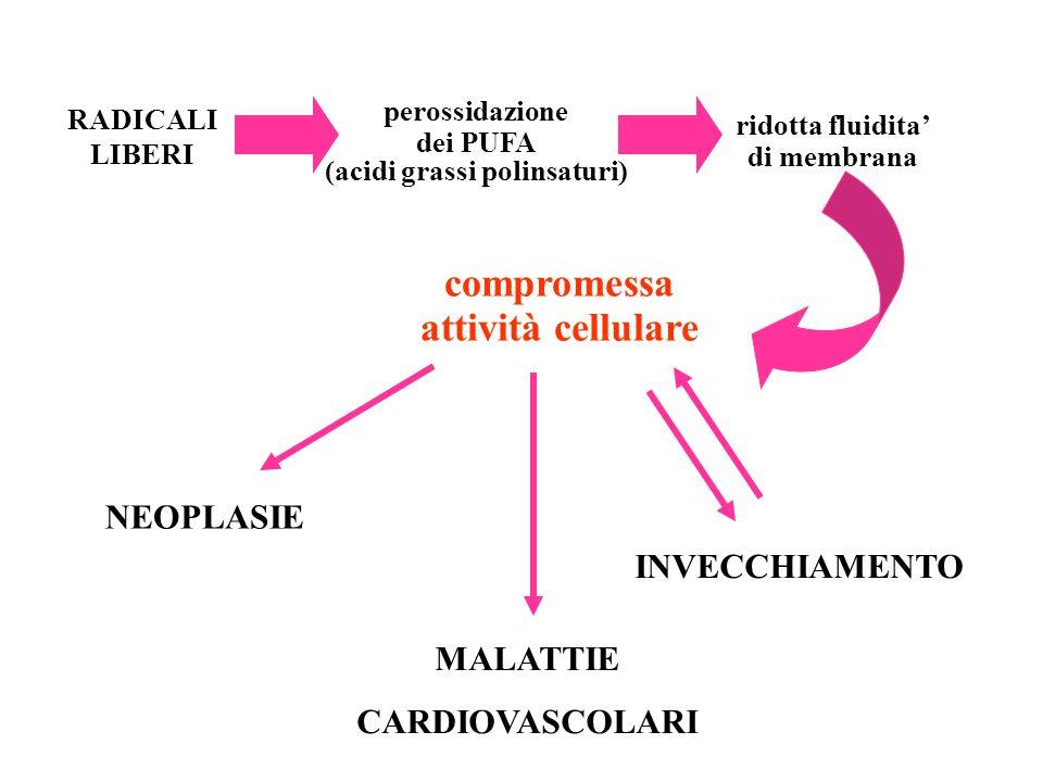 RADICALI LIBERI ridotta fluidita di membrana perossidazione dei PUFA (acidi grassi polinsaturi) compromessa attività cellulare NEOPLASIE MALATTIE CARD