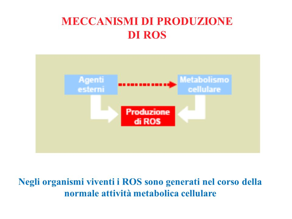 MECCANISMI DI PRODUZIONE DI ROS Negli organismi viventi i ROS sono generati nel corso della normale attività metabolica cellulare