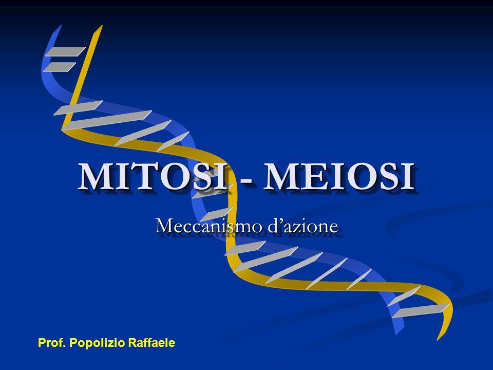 Meccanismo dazione MITOSI - MEIOSI Prof. Popolizio Raffaele
