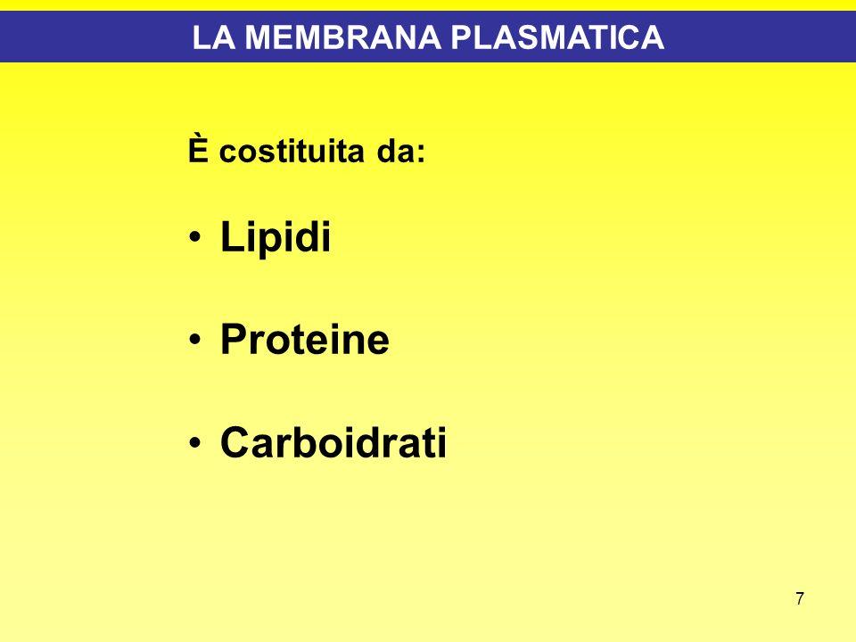 8 La Membrana Plasmatica - LIPIDI I fosfolipidi di membrana sono molecole anfipatiche, con una testa polare idrofilica ed una coda idrofoba I lipidi di membrana si assemblano spontaneamente in doppio strato se posti in acqua Le membrane naturali si chiudono spontaneamente